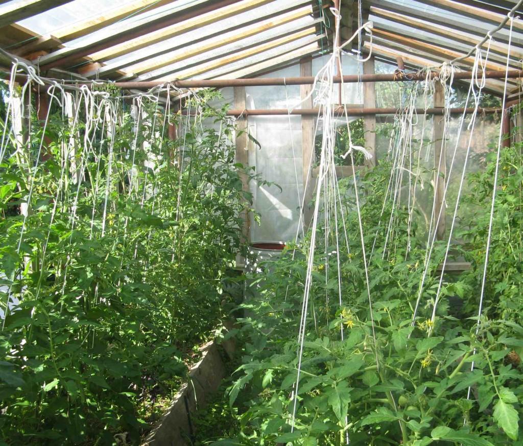 подвязка томатов в разные стороны