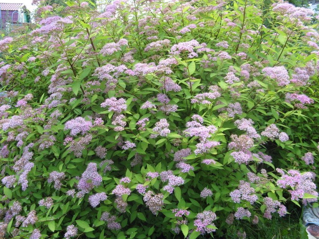 Летнее цветение фото