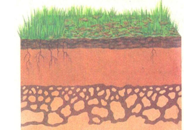 Картинки разрез по почвам