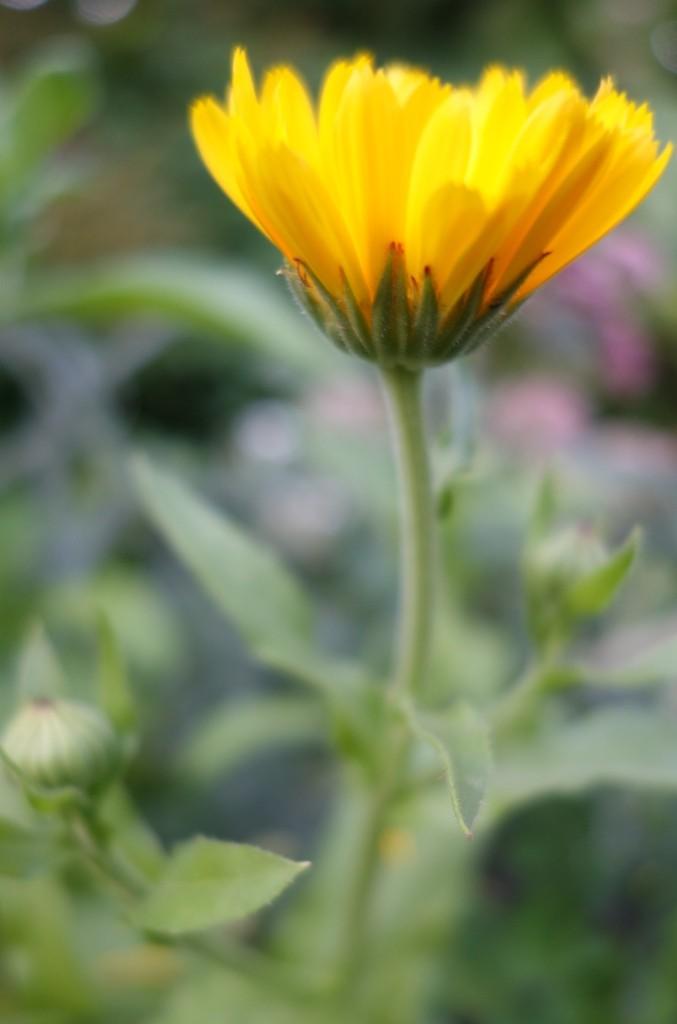 солнечный цветочек