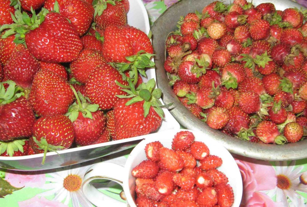 несколько видов ягод