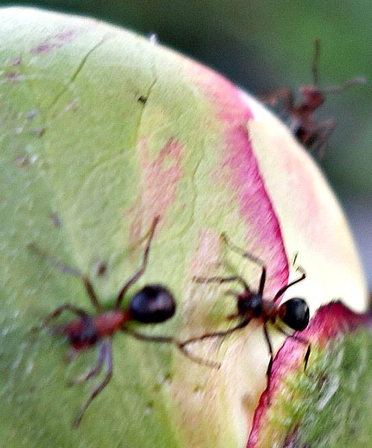 муравьишки осваивают новую планету