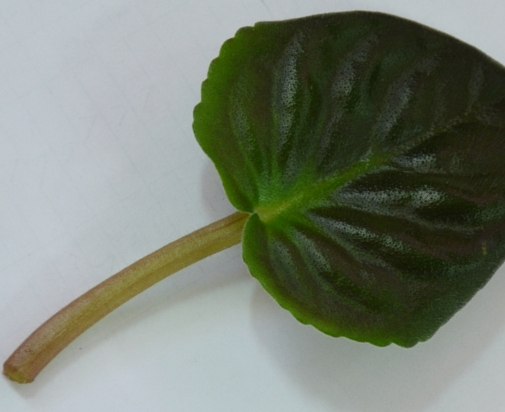 лист для размножения