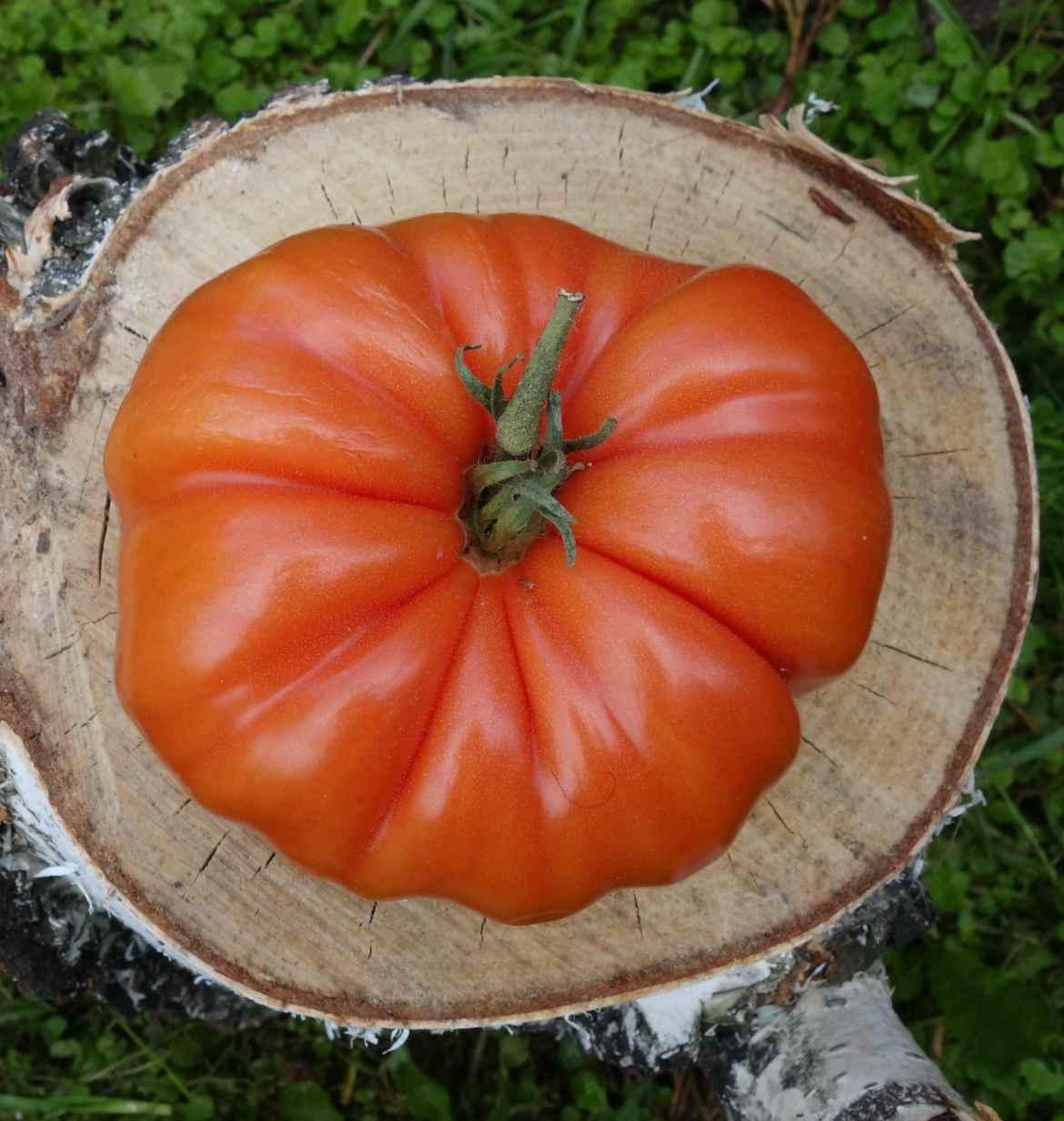Сорта помидоров с фото и описанием2