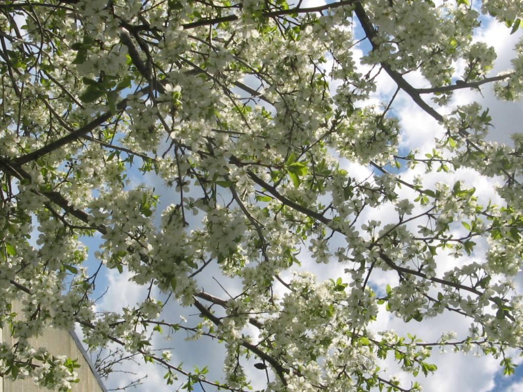 Чем подкормить плодовые деревья весной