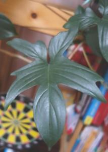 рассечённый лист